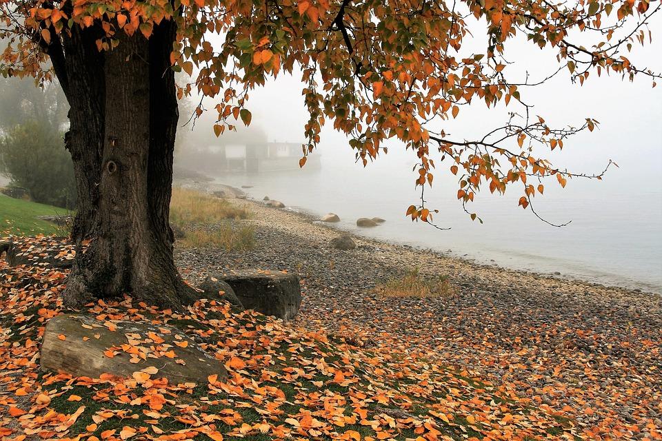autumn-3144379_960_720